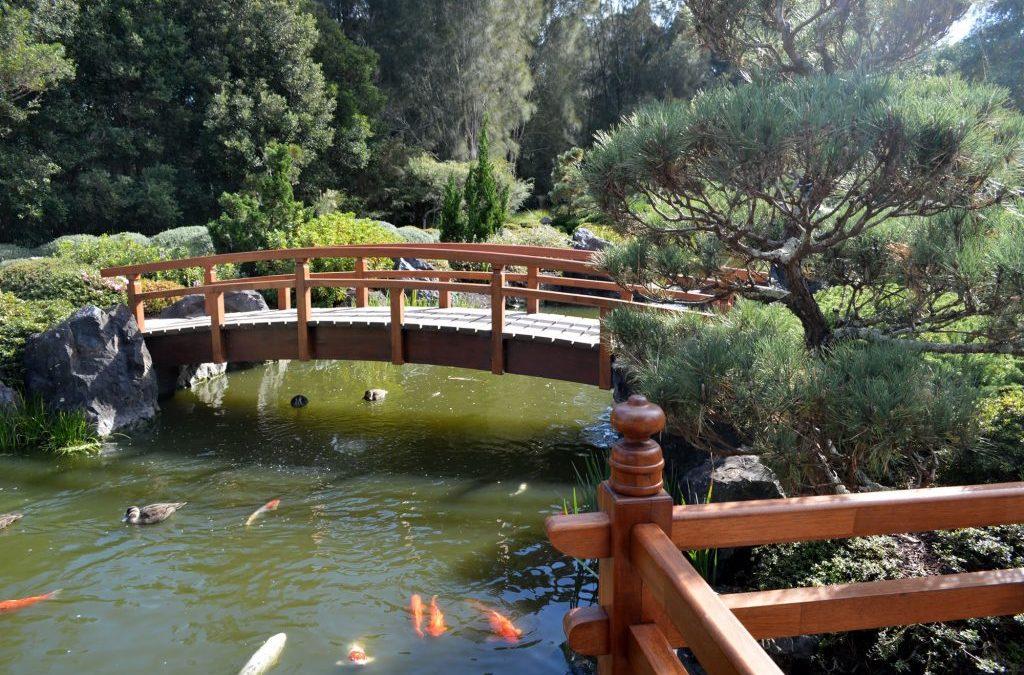 Auburn Japanese Gardens- entry fee $5 22nd April Thursday Social